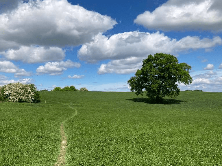 Whitchurch Walking Festival 2021 is being planned for Friday 7th - Sunday 9th May